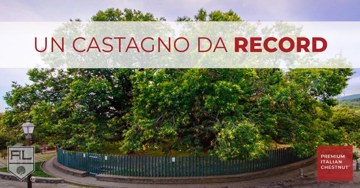castagno_da_record_artenalegnami_quiz
